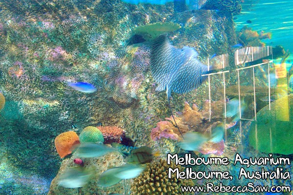 MELBOURNE AQUARIUM-43
