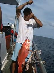 20100401 (fymac@live.com) Tags: mackerel fishing redsnapper shimano pancing angling daiwa tenggiri sarawaktourism sarawakfishing malaysiafishing borneotour malaysiaangling jiggingmaster