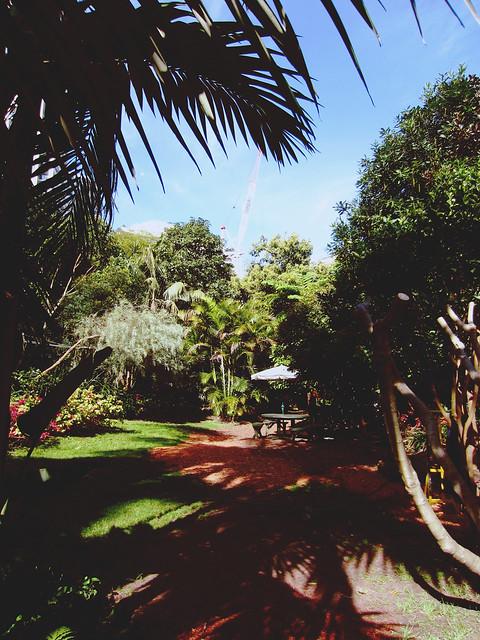 Wendy Whiteley's Secret Garden 5