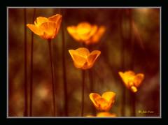 Una tarde cualquiera (Julio_Castro) Tags: flowers naturaleza mountain flores primavera nature field spring nikon campo montaña navacerrada nikond200 juliocastro