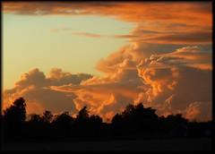 Cloudbusting [EXPLORE] (Marie Granelli) Tags: autumn sky tree silhouette clouds skne sweden september explore sdersltt nikons8000
