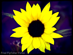 20110726_0406_lomo (Fred Flyfisher Fotos) Tags: flower color macro floral lomo pentax pentaxcamera k100d pentaxk100d pentaxian pentaxart