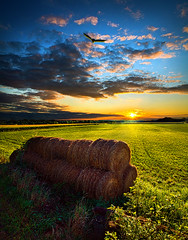 Harvest (Phil~Koch) Tags: morning flowers blue sunset red sun green love floral field vertical wisconsin clouds sunrise photography landscapes spring twilight bravo peace earth farm natur scenic meadow inspired naturallight farmland serene agriculture inspirational horizons environement photocontesttnc11 philkoch myhorizonart stunningphotogpin bestphoto4gpinsep2011