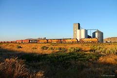 Southbound BNSF at Hannchen, CA (Patrick Dirden) Tags: california railroad train rail pacificnorthwest ge bnsf grainelevator freighttrain modoccounty burlingtonnorthernsantafe hannchen es44dc gevo klamathbasin bnsfrailroad burlingtonnorthernsantaferailroad modoccountyca bnsf6642 insidegateway hannchenca