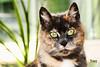 Happy Weekend Showcase (Tracydays) Tags: cat weekendshowcase