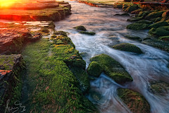 Turimetta and its vivid greens! (sachman75) Tags: green water moss rocks waves australia nsw newsouthwales waterflow northernbeaches warriewood leefilters turimettabeach canon5dmarkii ndgrad3stop singhrayreversendgrad3stop narrabeennorth