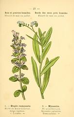 Anglų lietuvių žodynas. Žodis carpetweed reiškia kiliminės drobės lietuviškai.