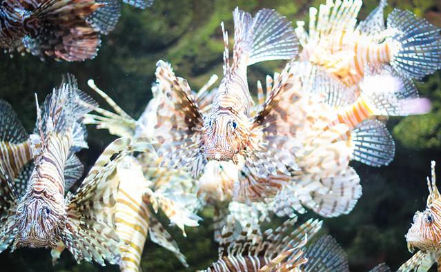 Fish- GA Aquarium