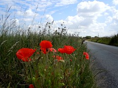 Poppies by the road (pilechko) Tags: road england orange color green clouds weeds lincolnshire poppies roadside sjy crowle