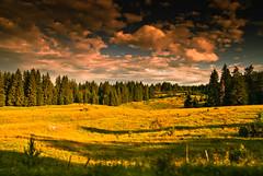 fields - 002 scenery
