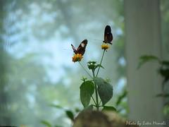Tiergarten Schönbrunn - Butterflies