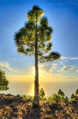The Tree.LP