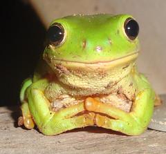 frog burns