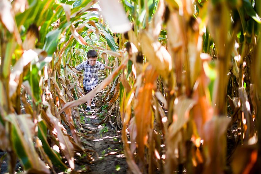 081411 012 shea portraits corn field ak