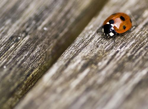 Ladybird by BeccaG