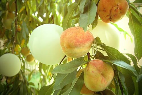 balloon peach decoys - a million dollar idea?