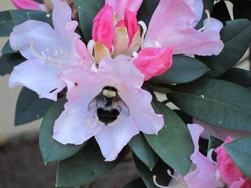 bee paradise