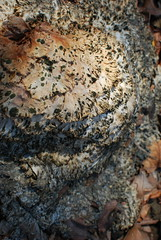 Spotted Blob (Chris Gusen) Tags: plant green lace decay spots decomposition frilly