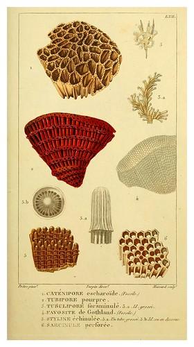 016-Manuel d'actinologie ou de zoophytologie (Volume plates) 1834- H.-M. Ducrotay Blainville