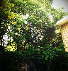 backyard overgrowth