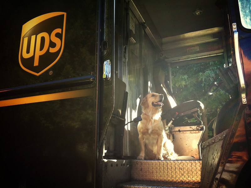 {34/52 2011} UPS, Can You Please Deliver Me To Stanley's House In Time For His Birthday Pawty?
