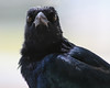 Day 236