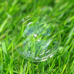 round like a bubble... ( EkkyP ) Tags: green grass circle square round bubble squaredcircle 111 88 justcropped sooc 111things