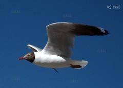Freedom is Flight