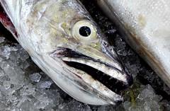 A Pescada no Mercado (Markus Lüske) Tags: lueske lüske algarve portugal olhao olhão ria formosa riaformosa culatra ilhadaculatra luske