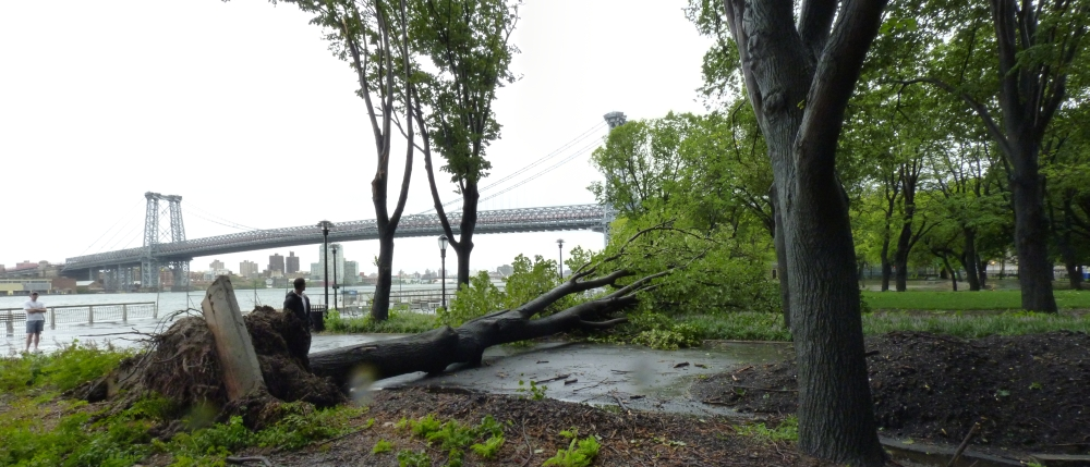 East River Park Tree Down