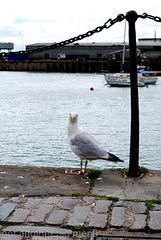 Folkestone, England - Local scenes