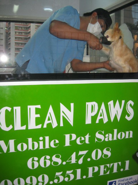 clean paws mobile pet salon