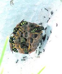 GF280 (molarinho29) Tags: nature report natureza insects insetos