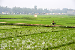 112_LAO89220023 (TC Yuen) Tags: vietnam sapa hmong terracefarming locai
