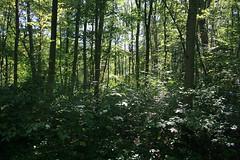Dichte Bewaldung