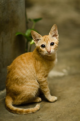 Hello, Felix (puguhindra) Tags: cats cute animal animals cat pose indonesia bigeyes interesting nikon funny flickr metro felix sb600 85mm kawaii stare neko lovely nikkor staring af85mmf14d flickraward d7000 catmoments