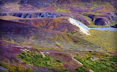 Autumn in Denali, Alaska landscape (blmiers2) Tags: travel autumn mountain mountains fall nature alaska landscape nikon purple denali d3100 blm18 blmiers2