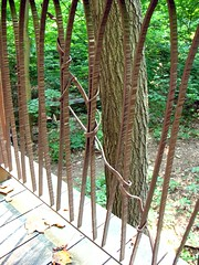 forest railing (Vilseskogen) Tags: plants house tree philadelphia public gardens forest garden us gardening pennsylvania creative commons treehouse sound deciduous forests sounds longwood hardwood listen northeastern railiing vilseskogen