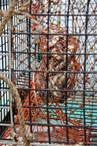 Baited Lobster Trap