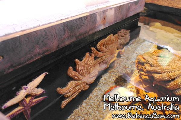 MELBOURNE AQUARIUM-39