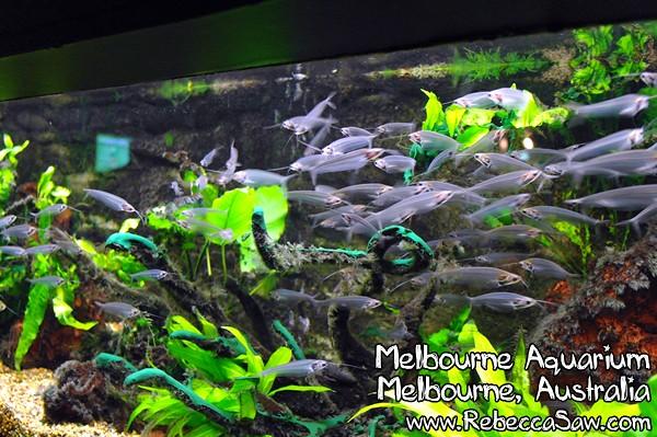 MELBOURNE AQUARIUM-32