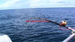 20100731 (fymac@live.com) Tags: mackerel fishing redsnapper shimano pancing angling daiwa tenggiri sarawaktourism sarawakfishing malaysiafishing borneotour malaysiaangling jiggingmaster