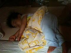 夜寝るとらちゃん(2011/9/6)