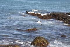crystal crescent beach (knitalatte11) Tags: family seaweed sand matthew stones warmth september rebekah deborah crystalcrescentbeach novascotiabound
