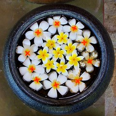 A spa pot (sammsky) Tags: flowers beauty decorative spa intricate thaiand flowersadminfave fantasticflower flowersarebeautifu