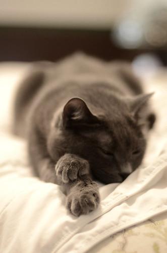 Zasha snoozes