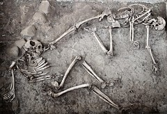Hadyakh (dynamosquito) Tags: archaeology skull earthquake ancient village iran persia ancien crne perse skeletton archologie squelette seisme khorassan seism tremblementdeterre neyshapour canoneos7d dynamosquito hadyakh seljukidera ereseljoukide ereilkhanide ilkhanidera