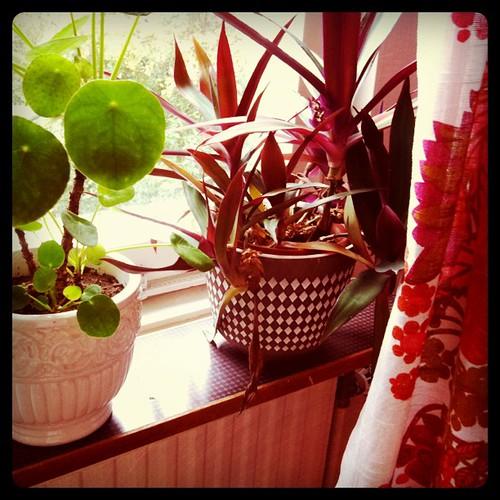 Mina blommor i gamla krukor
