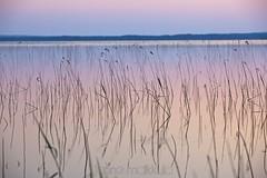 IKI (ikithule) Tags: summer lake nature night forest suomi finland colours view scene scape maisema mets midnightsun kes landcape luonto y jrvi reflecion heijastus kesy nkym vrit keskiynaurinko jrvikorte ikithule