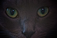A cat sees himself as the human (Antonio Vicaretti) Tags: pet cats green eye animal animals lady cat canon photography photo eyes ashley brett 70300 2011